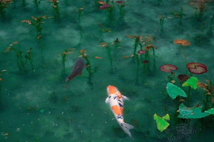 teich-koi-small-pond